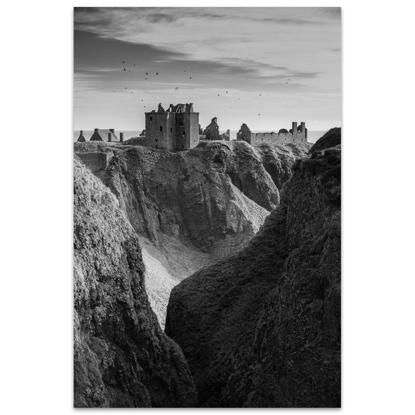 Birds above Dunnottar castle in Scotland